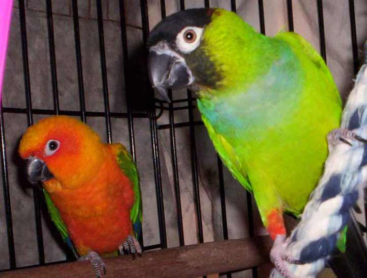 Avian & Exotic Pet Care